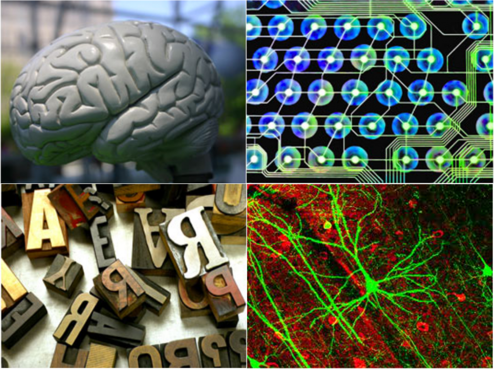 Welcome to the Cognitive Science Program at The University of Connecticut.